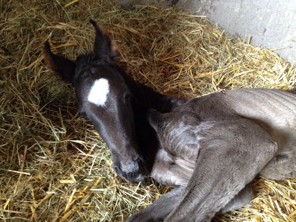Fohlen hält Ausschau nach der Mutter - Loesdau Blog