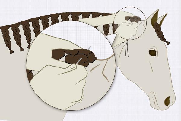 Nah am Mähnenkamm wird der Haarknoten zusammengenäht.
