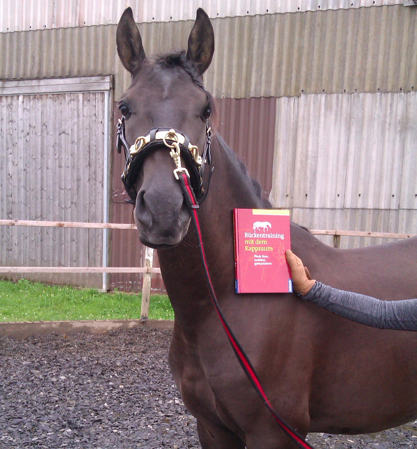 Longenarbeit ist besonders für junge Pferde geeignet.