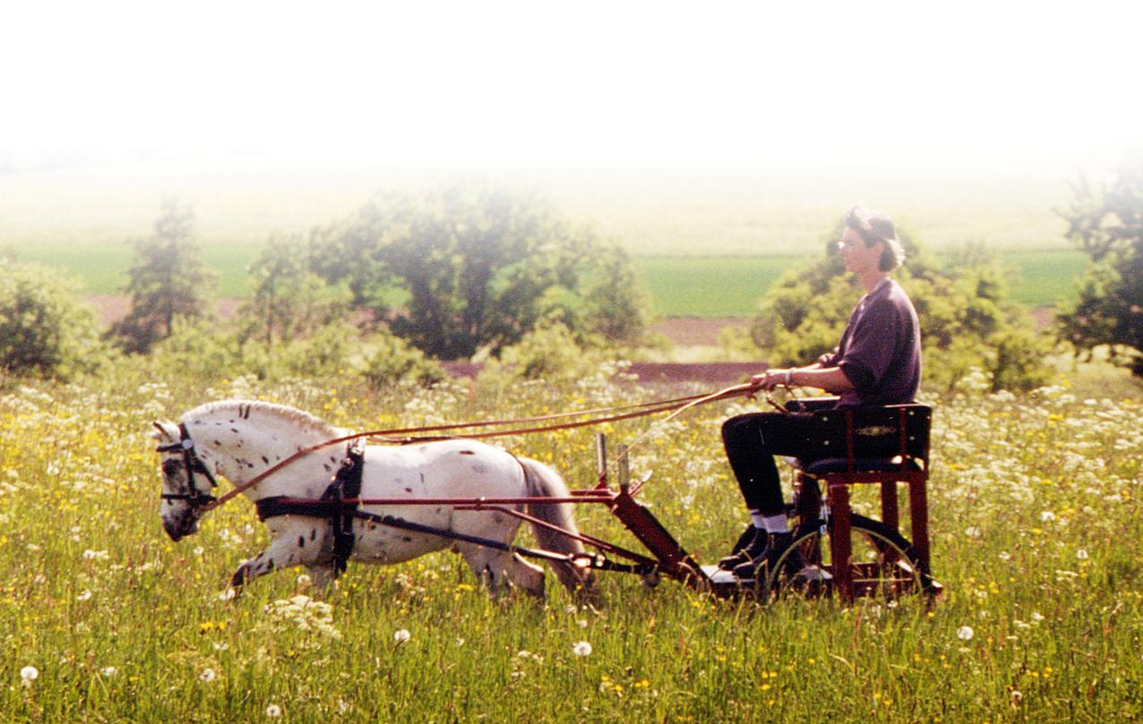 Ponys – frech, schlau und niemals langweilig