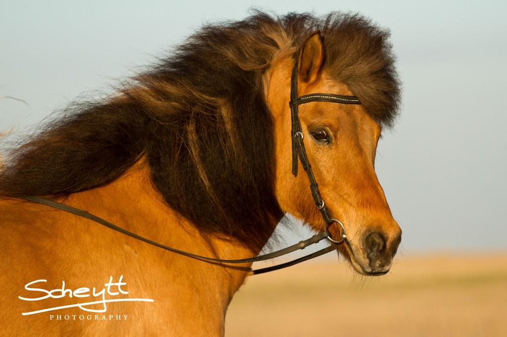 Gute Pferde Portraits