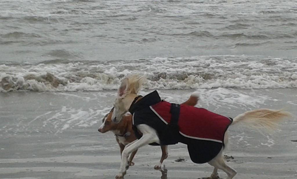 Hundespaß pur! Und Hundemantel Benno macht alles mit.