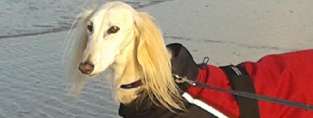 Guter Begleiter: Qeresh freut sich, wenn ihm der Hundemantel Benno angezogen wird.