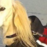Hundemantel Benno: Superschutz an nass-kalten Tagen