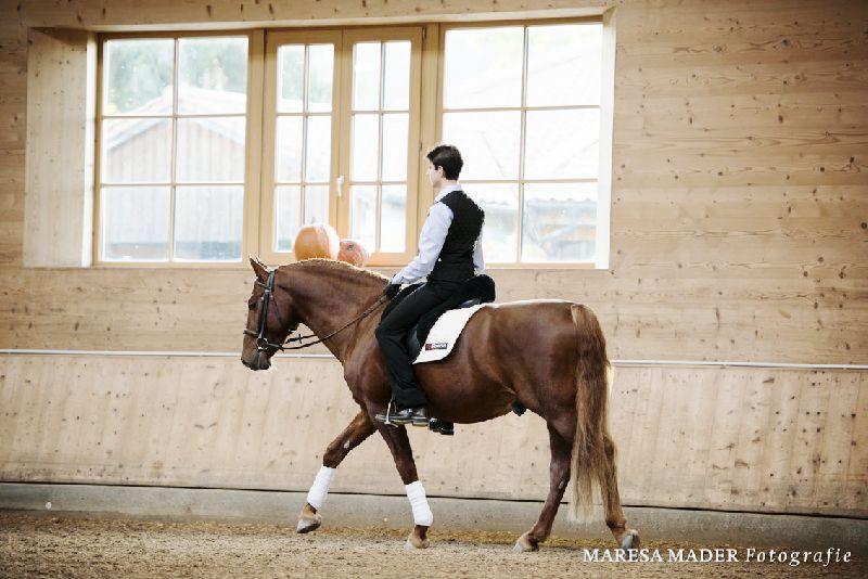 Ein sehr selbstbewusstes Pferd wie Sirius musste erst einmal davon überzeugt werden, dass man nichts Böses von ihm wollte.