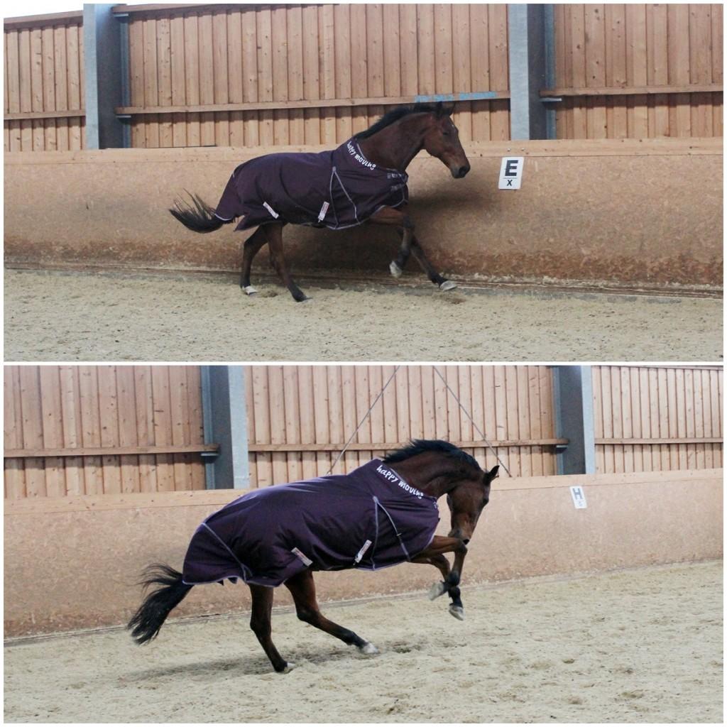 Auch beim Härtetest bleibt die Pferdedecke sicher an ihrem Platz.