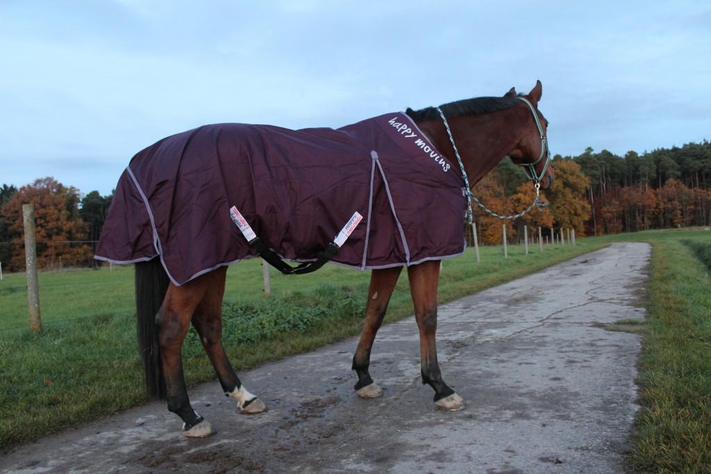 Auch beim Spaziergang bleibt die Pferdedecke von Happy Moving an ihrem Platz.