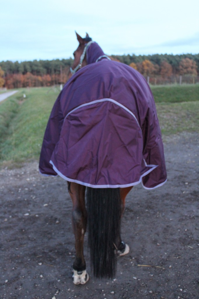 Super: Der riesige Schweiflatz deckt nahezu den kompletten Pferdepopo ab.