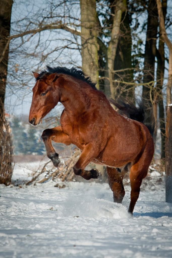Fühlt sich ein Pferd wohl, zeigt es das deutlich.