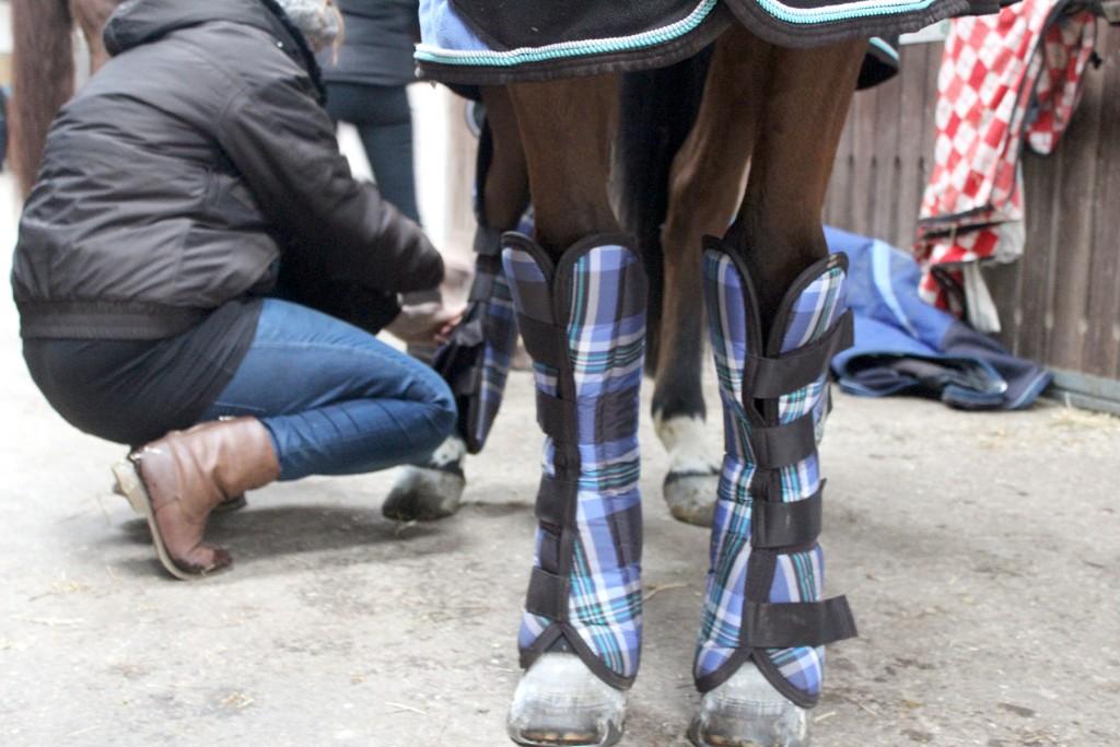 Packt euer Pferd gut ein für den Transport!