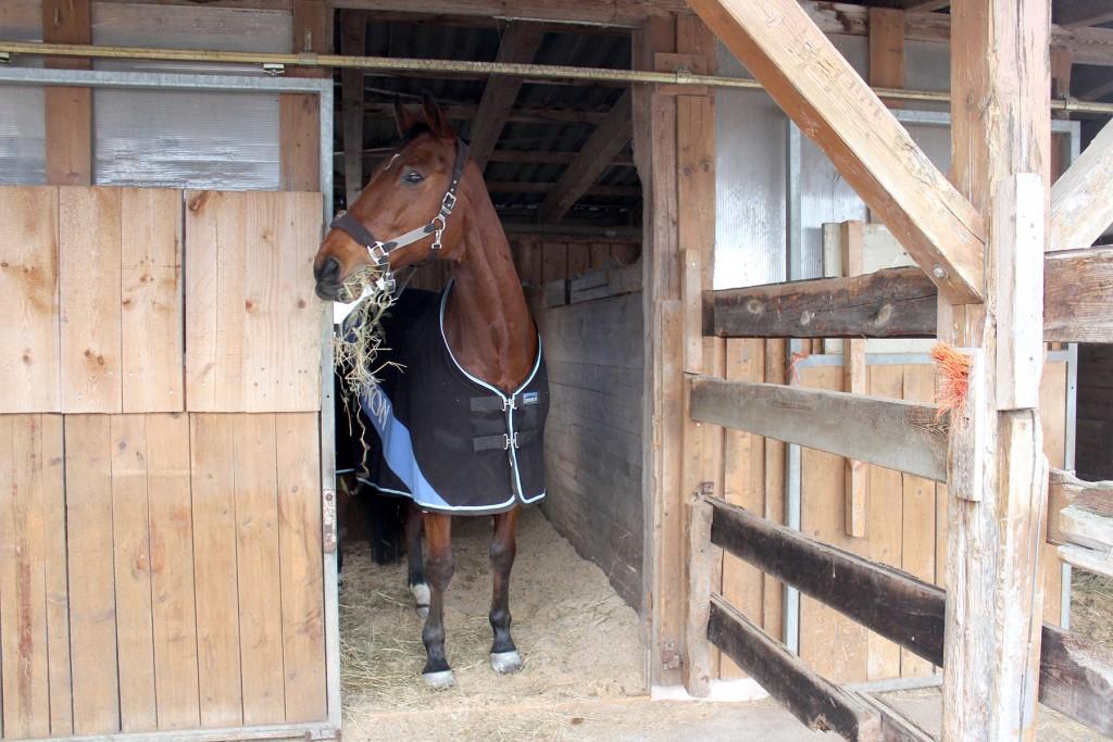 Lasst euch und eurem Pferd im neuen zu Hause erst einmal richtig Zeit, bevor es wieder ans tägliche Training geht.