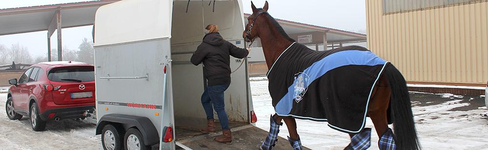 Der Pferdeumzug: Gut organisiert ist halb umgezogen!