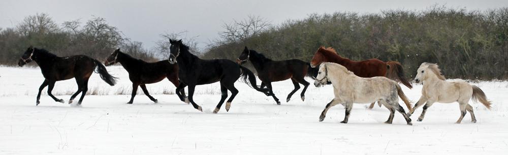 Mein Pferd ist krank – was tun?
