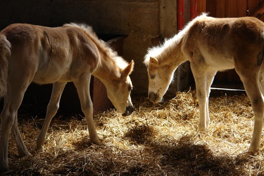 Gesundes Futter entscheidet über ein aktives Pferdeleben!