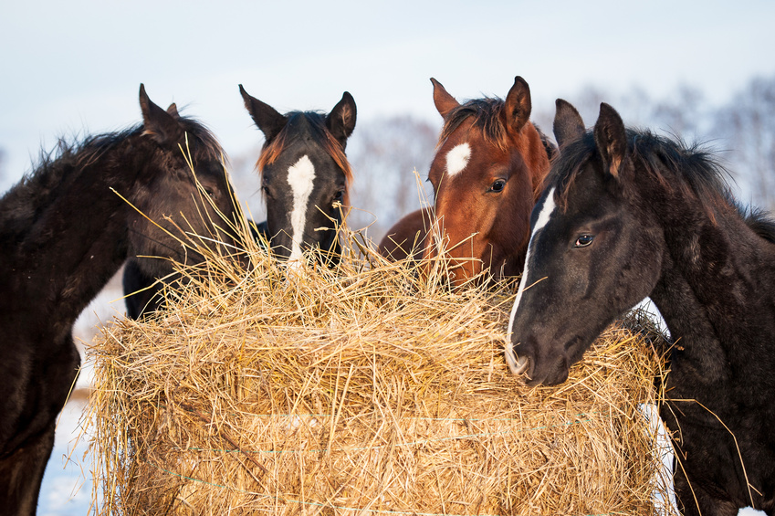 Pferdefütterung – Trends und Tipps