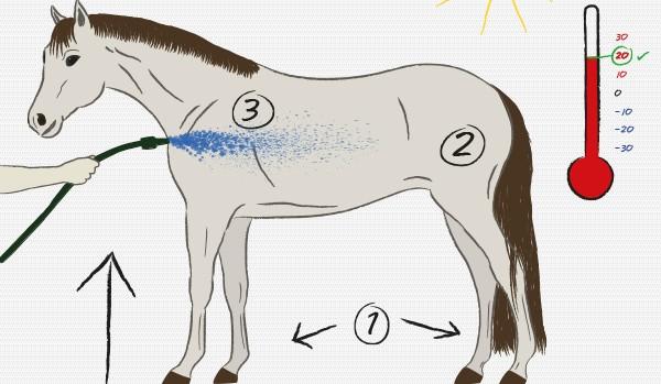 Pferde richtig duschen - Pferde abkühlen