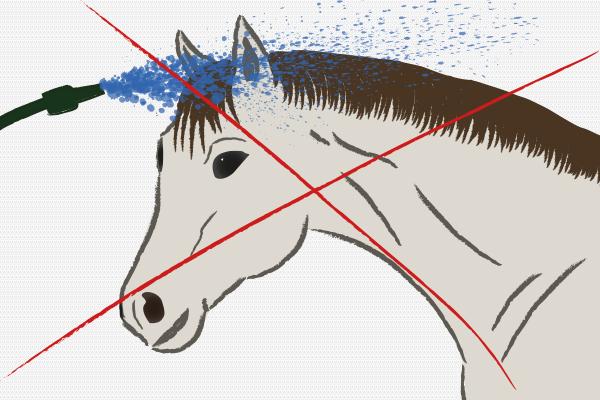 Pferde richtig duschen - kein Wasser in die Ohren!