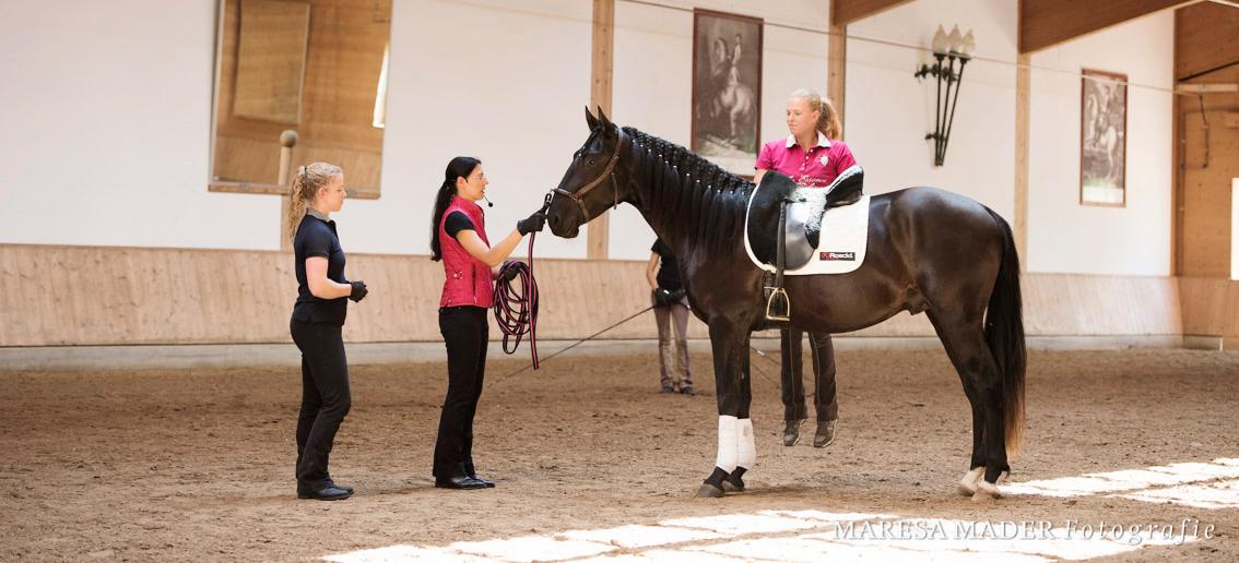 Das-erste-Mal-aufsteigen-beim-jungen-pferd