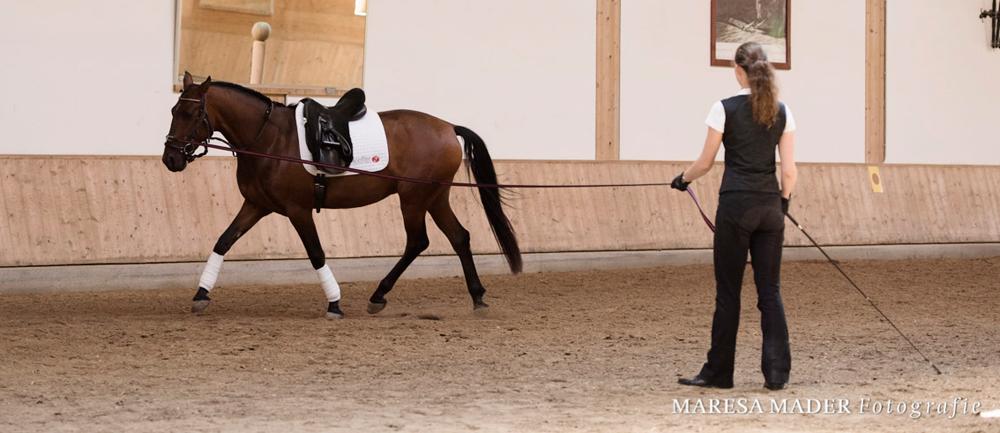 die-ausrüstung-des-jungen-pferdes