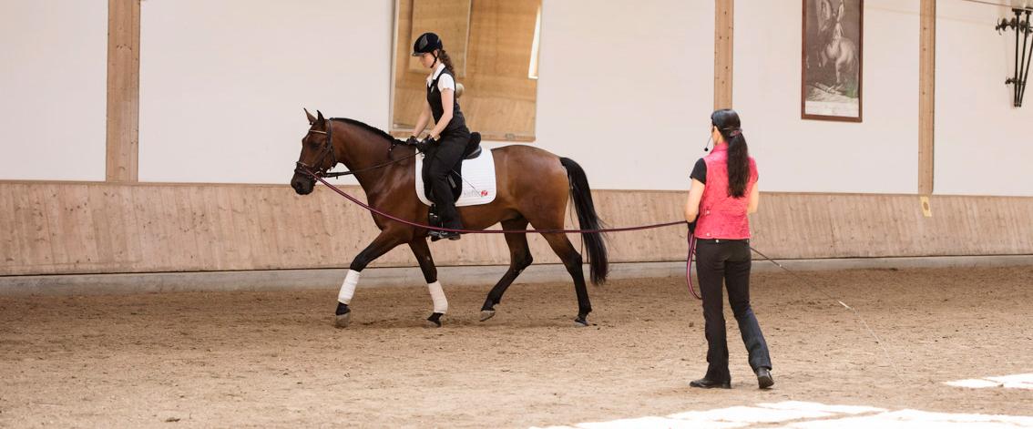 ein-jung-pferd-mit-reiter-an-der-longe