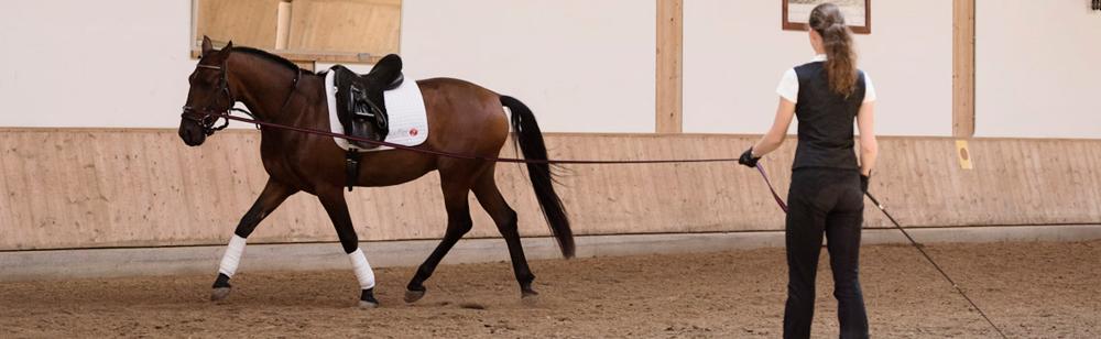 Ausbildung junger Pferde mit Anja Beran