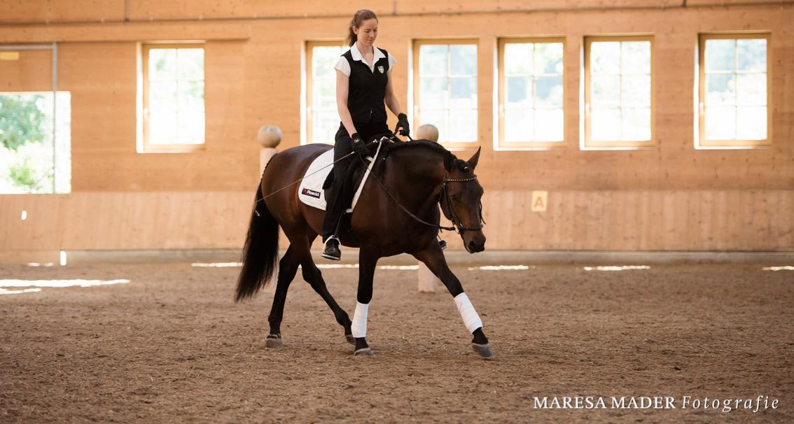 junge-pferde-werden-immer-vorwaerts-geritten
