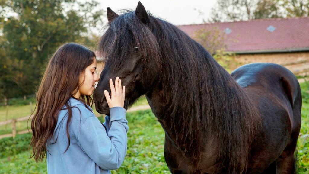 Ein Pferdefilm nicht nur für Islandpferdefans.
