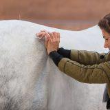 Rückenprobleme des Pferdes