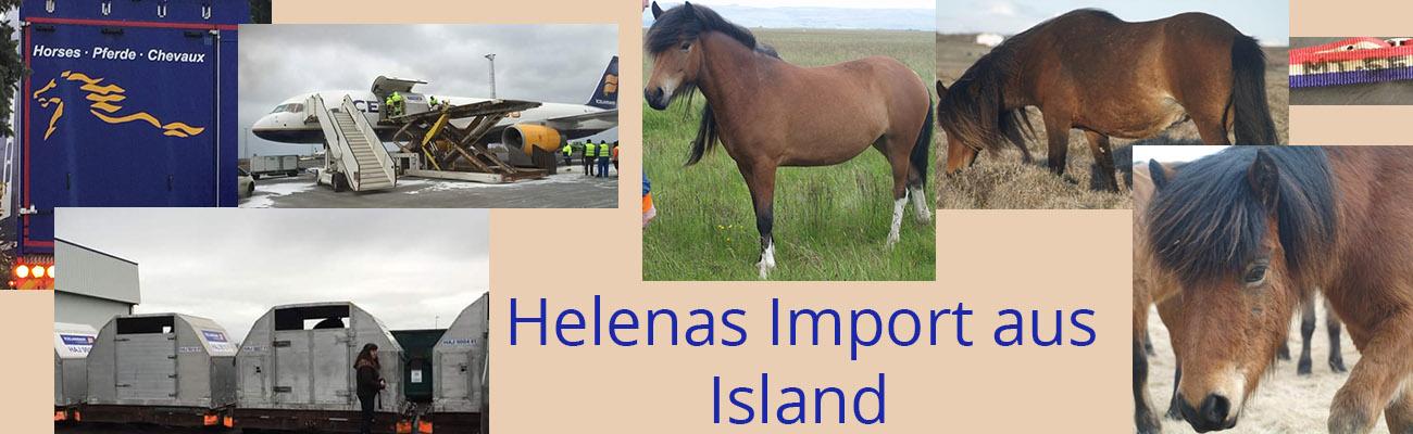 Helenas Import aus Island