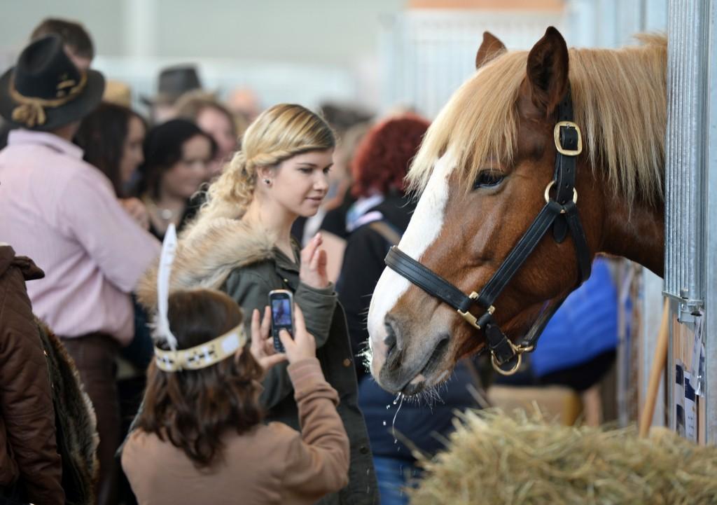 Vom 12. bis 14. Februar treffen sich Pferdeliebhaber in Friedrichshafen auf der Pferd Bodensee. Foto: Messe Friedrichshafen