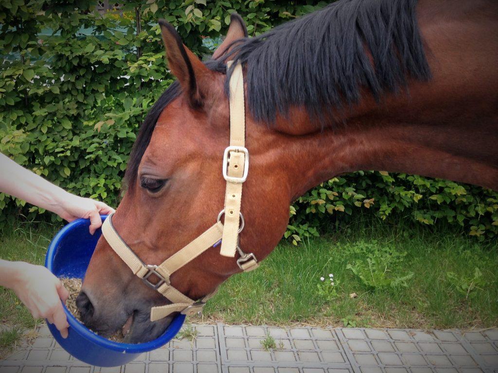 Bevor ein Pferd zugefüttert wird, sollte die Grundration optimiert werden.