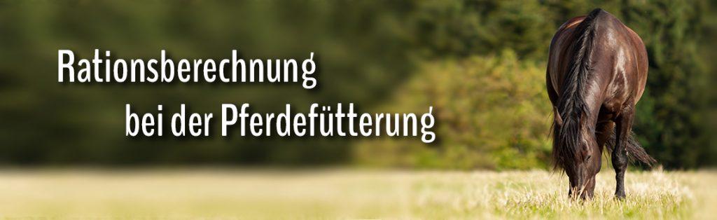 Titelbild Futterrationsberechnung mit grasendem Pferd