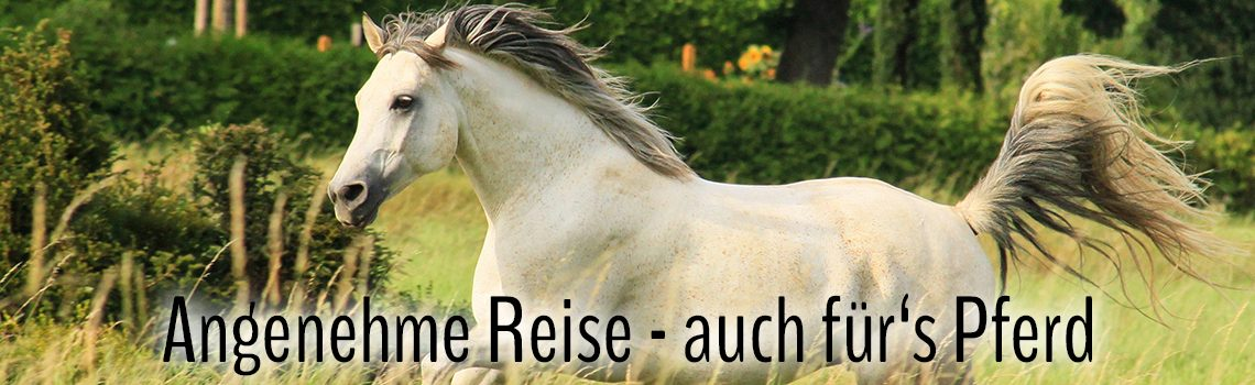 Angenehme Reise – auch für's Pferd