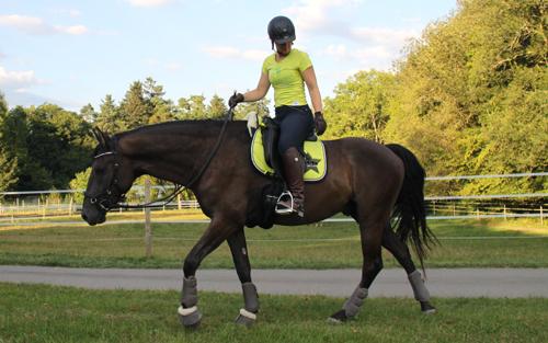 Durch-das-Micklem-Multibridle-entspannt-sich-das-Pferd