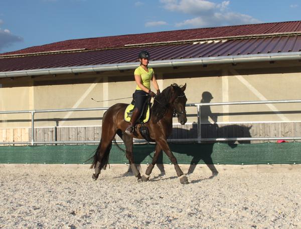 Durch-das-Micklem-Multibridle-laeuft-das-Pferd-zufrieden