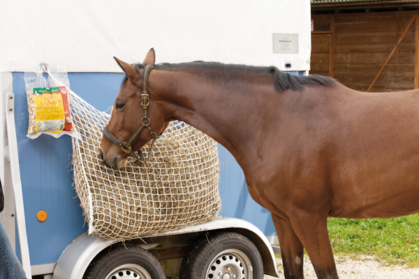Pferd-am-Heunetz