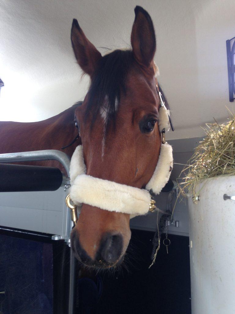 Startklar für die lange Reise: Im Pferdehänger muss alles sicher verstaut und ausreichend Heu vorhanden sein.
