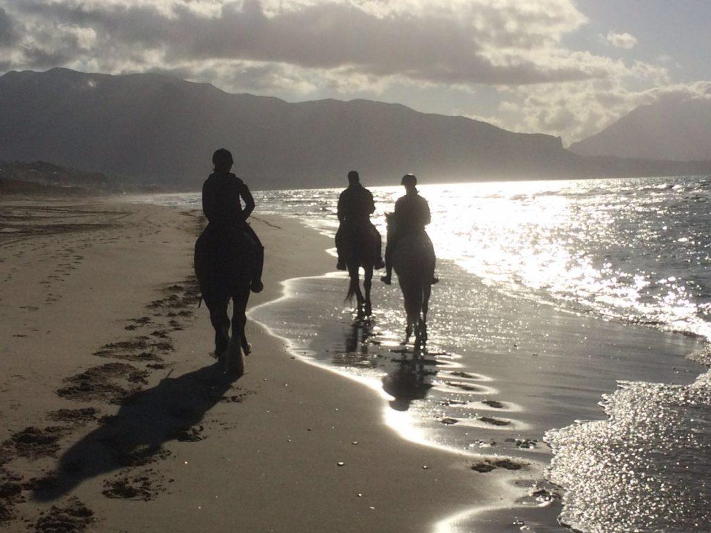 Belinos hat sich super eingelebt! lange Ausritte am Strand sind seine neue Lieblingsbeschäftigung.