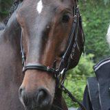 """Uta Gräf über das """"Pferde motivieren"""""""
