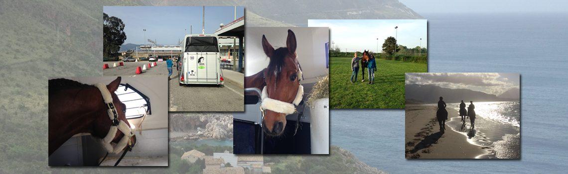 Umzug: mit dem Pferd nach Sizilien