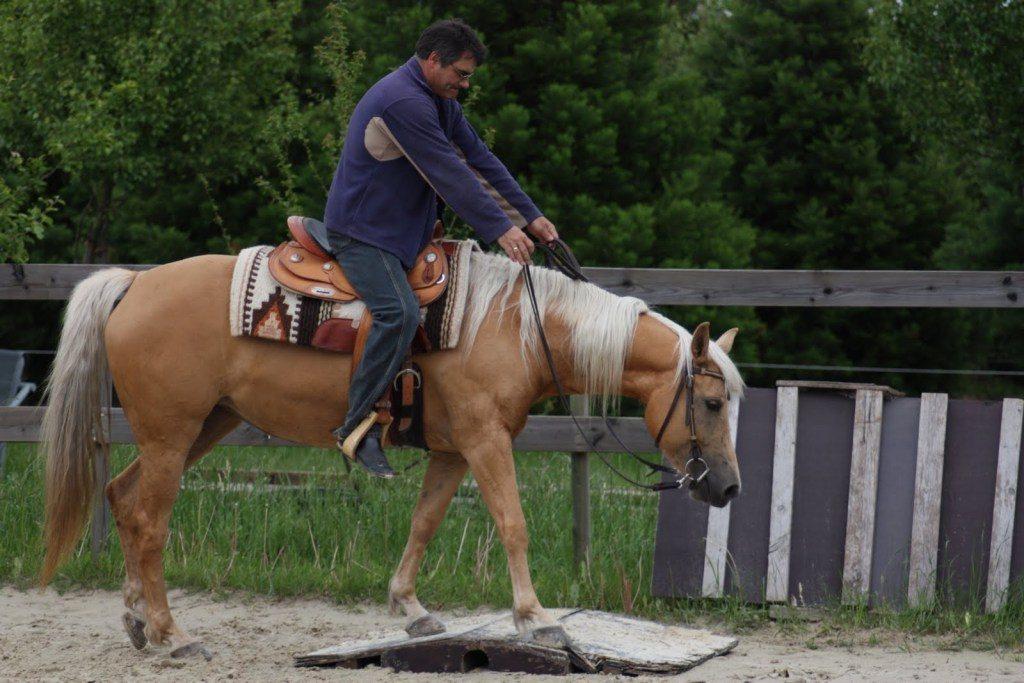 Uwe Epple mit Pferd Angel beim Training.