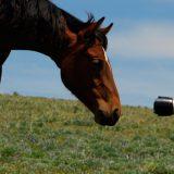 Pferdemenschen aller Kontinente