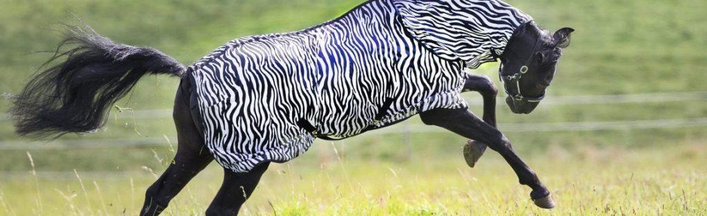 Fliegendecke für Pferde im Zebralook - von Loesdau