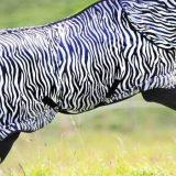 News bei den Pferdedecken und Fliegendecken