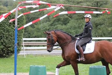 zur Abwechslung mit Grand-Prix Pferd im Trailparcour