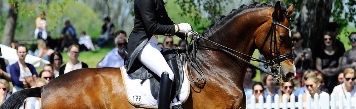 Loesdau auf der Pferd International in München