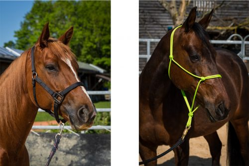 Pferde mit Stallhalfter und Knotenhalfter
