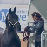 Fünf Tipps zum richtigen Verladen von Pferden