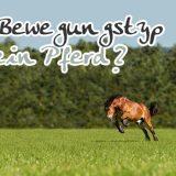 Test: Welcher Bewegungstyp ist mein Pferd?