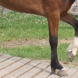 Naturtrail für Pferde